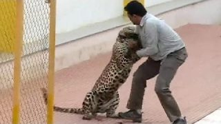 Bloody Brutal Leopard Attack In India