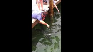 Florida Bloke Catches Monster Fish With His Arm