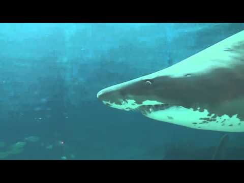 GRAPHIC: Brutal Shark Attack Caught On Camera