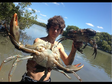 Young Aussie Fellas Catch Massive Mudcrabs For Lunch