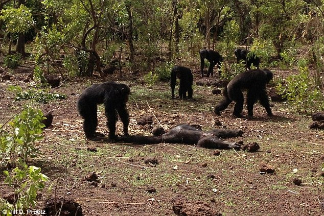 3cab757e00000578-4173442-the_gruesome_remains_of_a_west_african_chimpanzee_named_foudouko-a-59_1485810779208