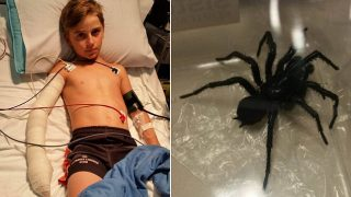 10-Year-Old Aussie Legend Bitten By World's Deadliest Spider