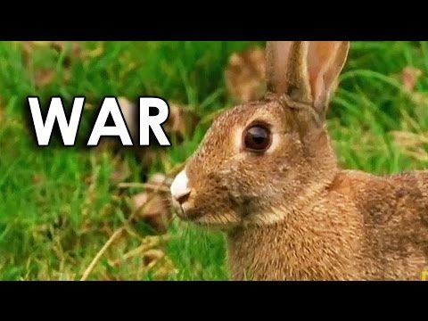 Ozzy Man Reviews: Stoats vs Bunnies