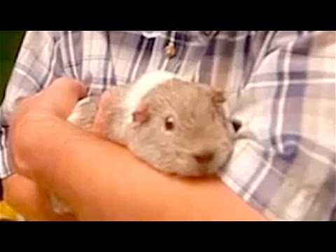 Ozzy Man's The Lives of Animals – Volume 6
