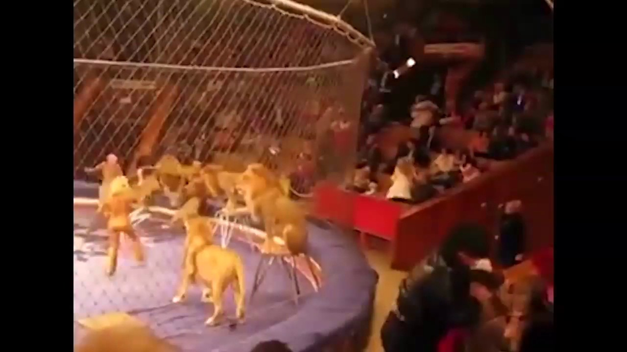 Ozzy Man Reviews: When Animals Fight Back