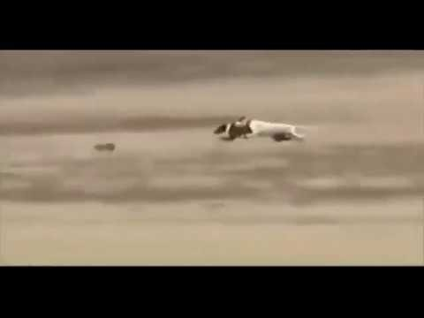 Ozzy Man Reviews: Bunny vs Dogs