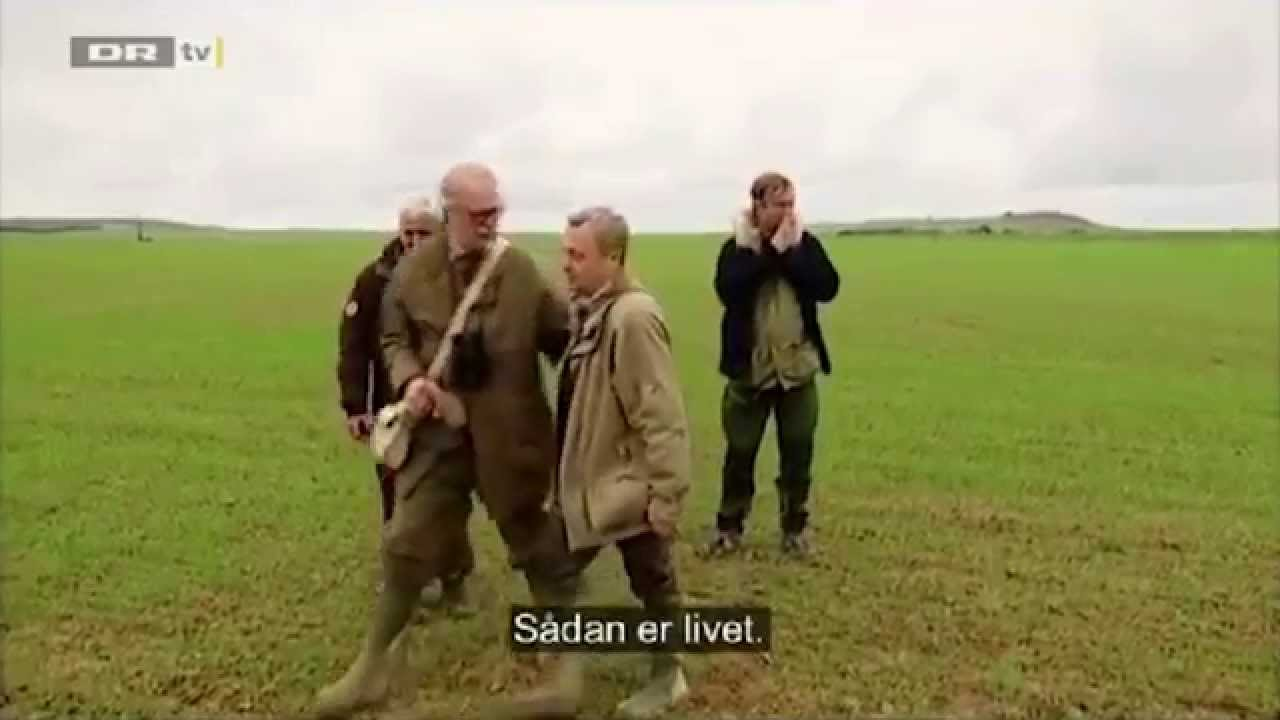 Ozzy Man Reviews: Danish Hunting Falcon