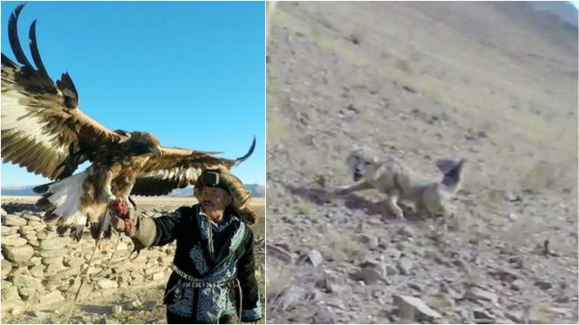 GoPro Footage of a Mongolian Eagle Hunting Proves Why You Don't F**k With These Majestic Birds