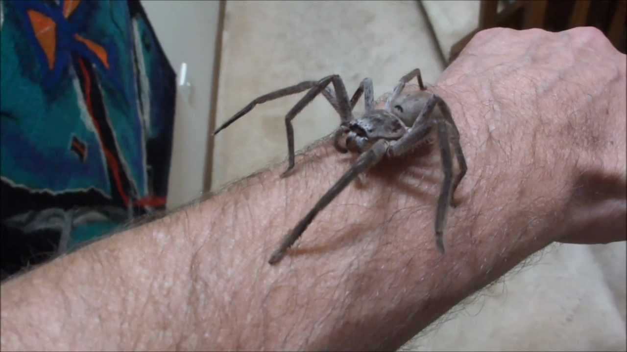 Me and my pet huntsman. Yeah nah f*ck that