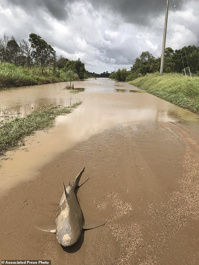"""Photo taken by Queensland state paramedic Lisa Smith. As Lisa approached the edge of some receding floodwaters, she spotted an """"unusual"""" sight on the street:"""