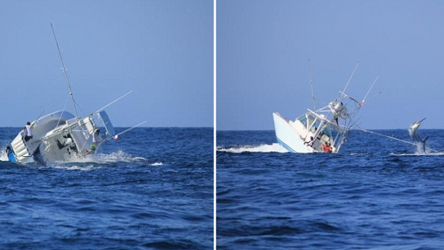 Massive Black Marlin Topples Over Entire Boat And Crew