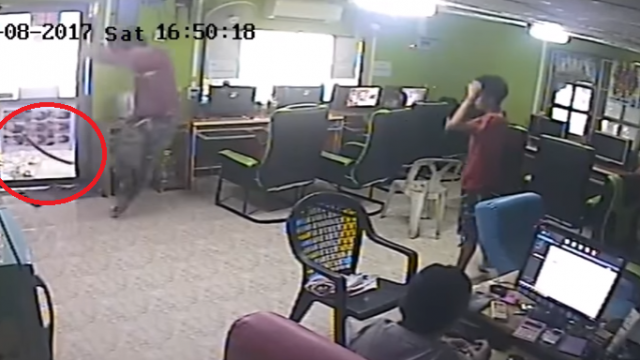 Internet Cafe Comes Under Siege By Flying Snake