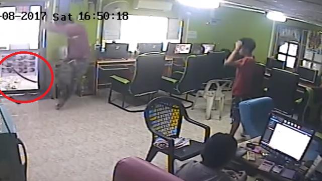 Internet Cafe Comes Under Siege By Flying Snake