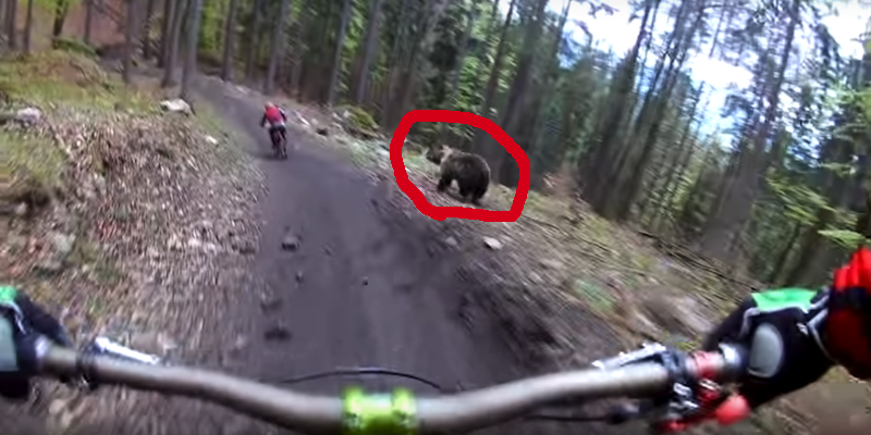Caught on Video: Mountain Bikers Barely Escape Being Attacked by Bear