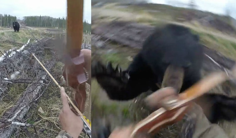 The Heart Stopping Moment A Black Bear Attacks A Hunter