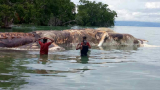 A Giant Creature Just Washed Up On The Shore Of Indonesia And People Are Freaking Out