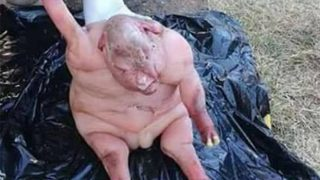 """Half Human Half Lamb"" Baby Has Horrified South African Villagers"