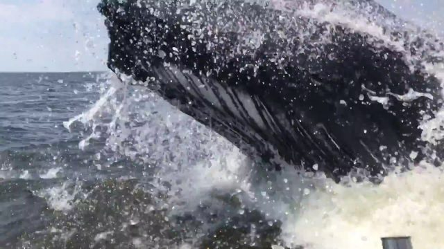 Holy Sh!t: Massive Humpback Whale Nearly Sinking A Fishing Boat Caught On Film