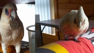 This Foul-Mouthed Cockatoo is the Most Australian Pet You'll Ever See