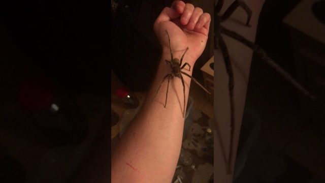 Chilling Footage Shows Man Holding The World's Deadliest Spider