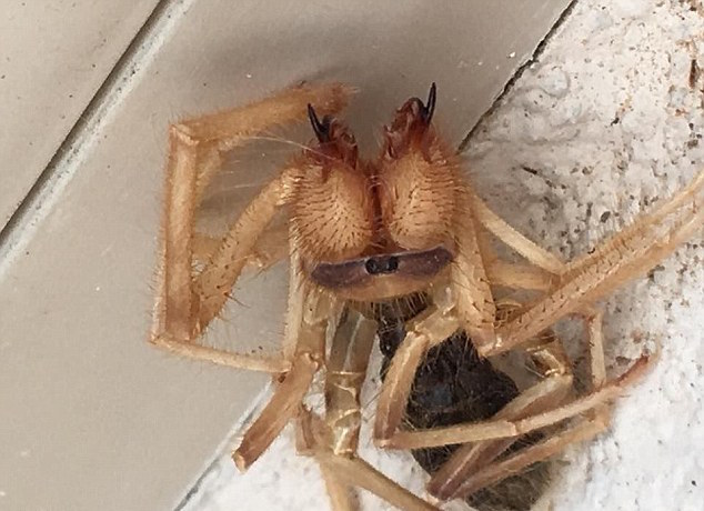 Arizona Bloke Finds Spider-Scorpion Hybrid, And It's Scary As F*&K!