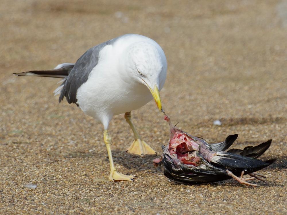 Credit: Kensington Gardens and Hyde Park Birds