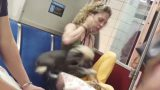This Pet Dog Was Confiscated by Authorities After This Video of It's Public Treatment Went Viral