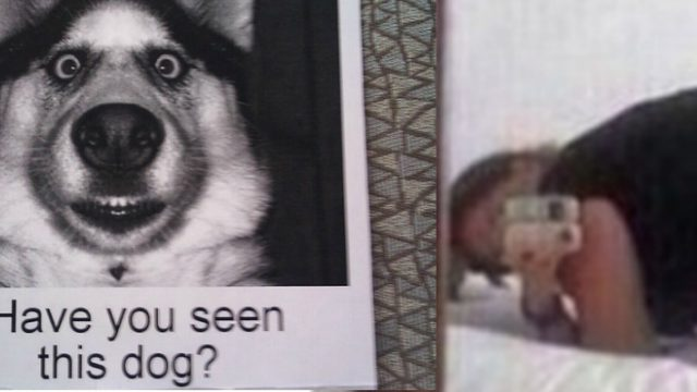 Woman Posts Provocative Picture Online As Last Resort To Find Lost Dog