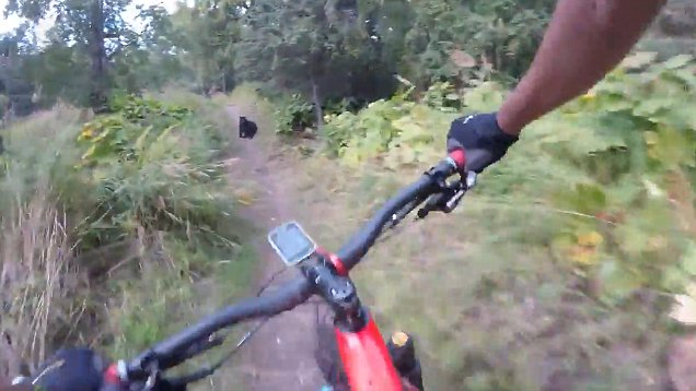 Mountain Bikers Quick Reaction After Huge Bear Appears On Trail