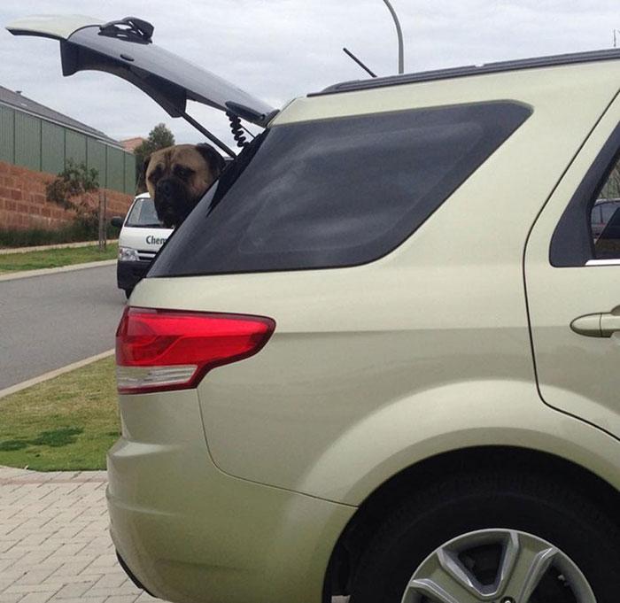 That's not even Lauren's car. Cyrus just appears when he needs to. (Credit: Lauren Birney)