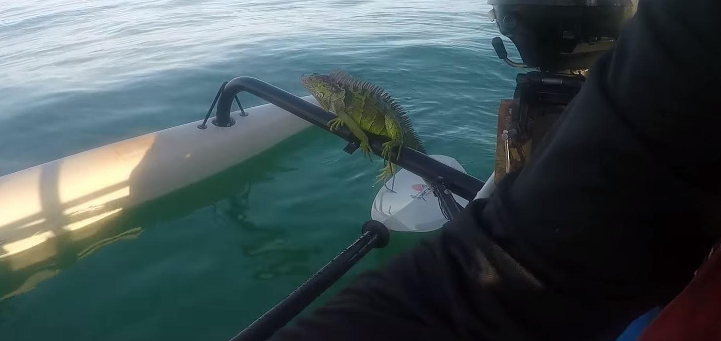 """Comfy?"" Credit: Key West Kayak Fishing"