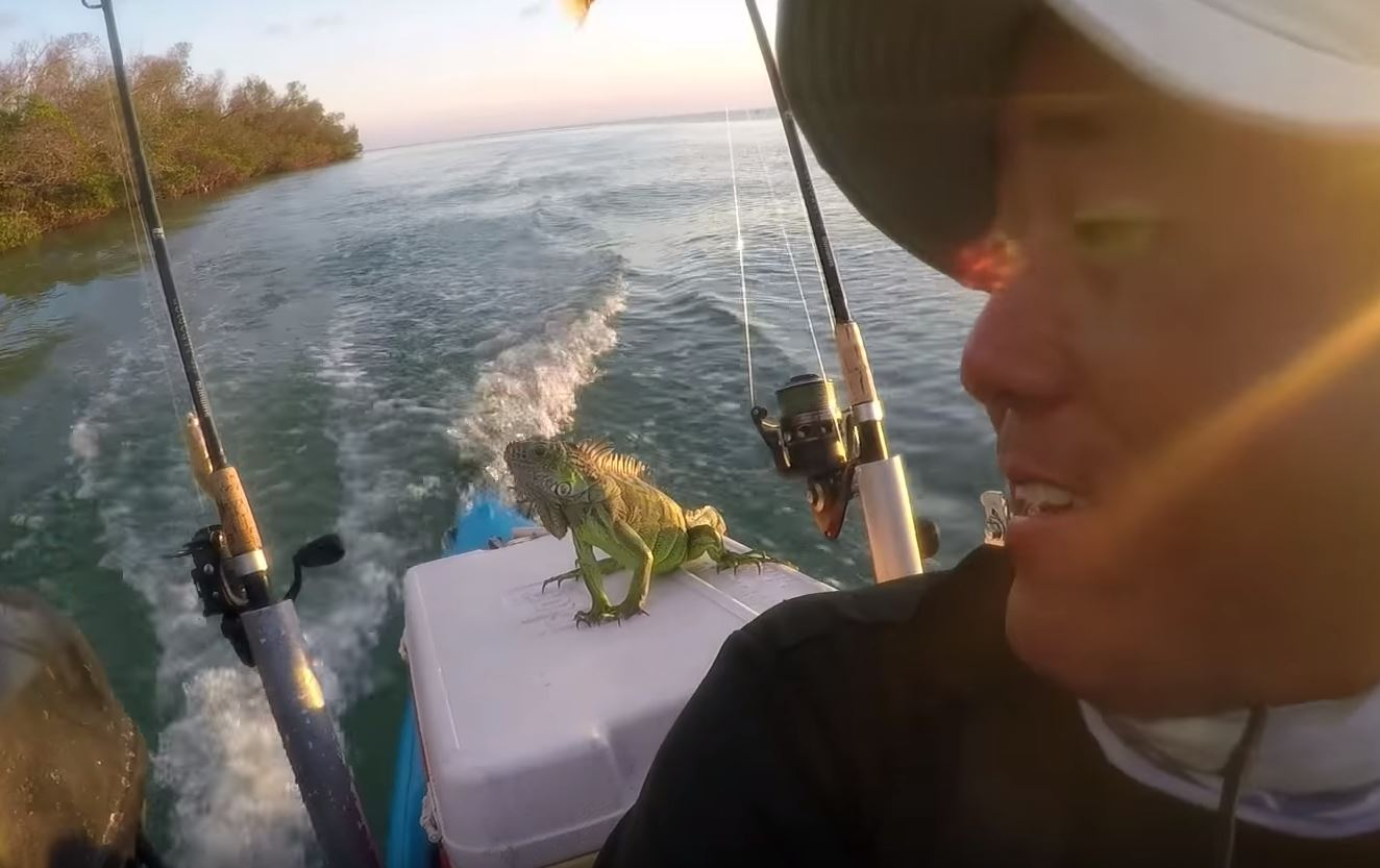 """Say, you got any brewskis in here?"" Credit: Key West Kayak Fishing"