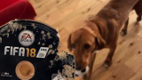 Amazon Have Responded to Bloke Whose FIFA 18 Game Was Eaten By His Dog