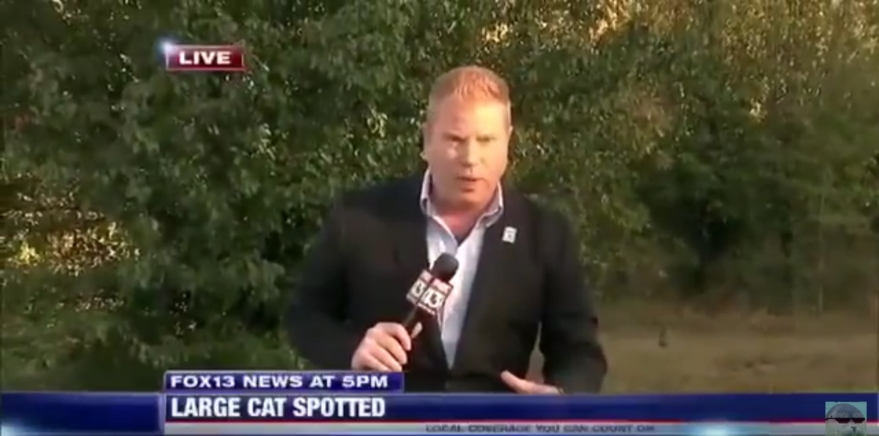 News Reporter Left Embarrassed After Perfect Photobomb on Live TV