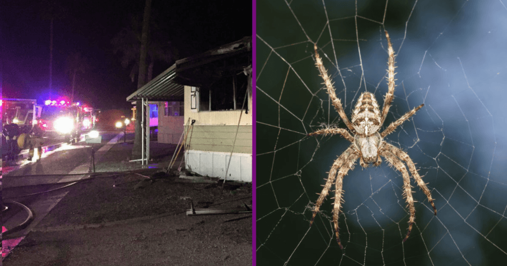 Bloke Kills Spider With Blowtorch, Burns House Down In Process