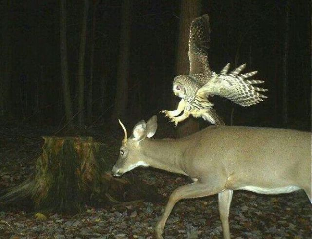These Trail Cameras Captured a Little More Than Anyone Could Have Intended