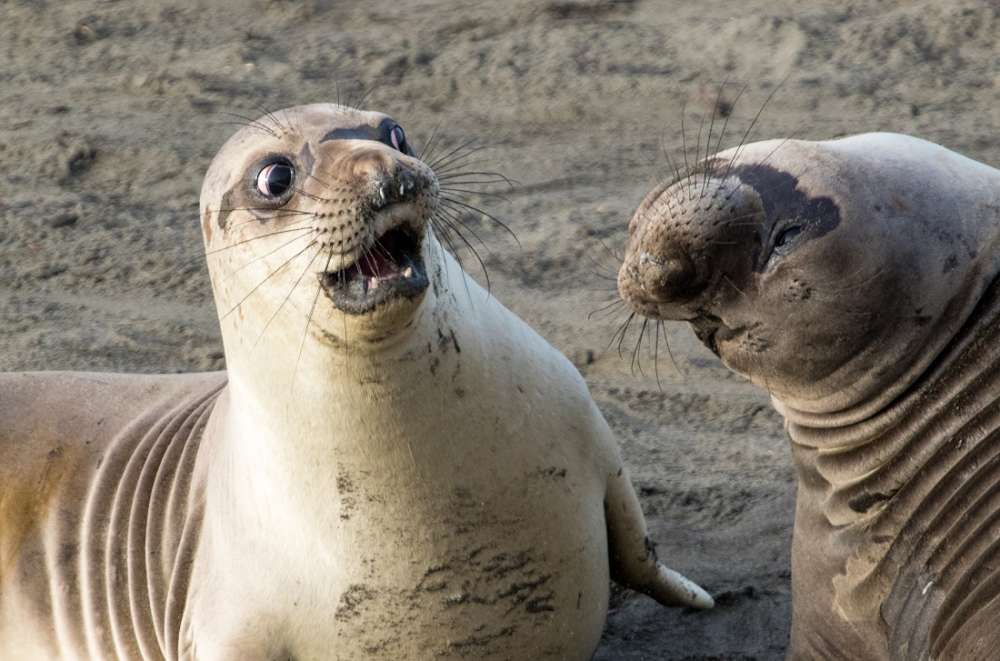 The Comedy Wildlife Photography Competition 2017 Finalists Have Been Announced