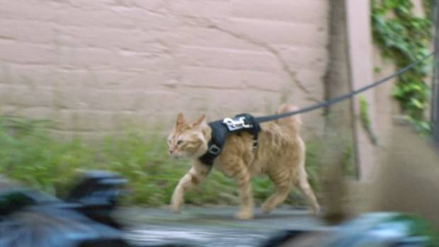 And a police cat! Credit: NZ Police