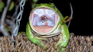 Photographer Reveals The Story Behind THAT Photo Of The Snake-eating Frog