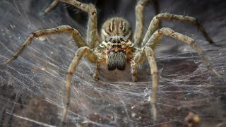 Study Shows Spiders Could Wipe Out The Human Race In One Year