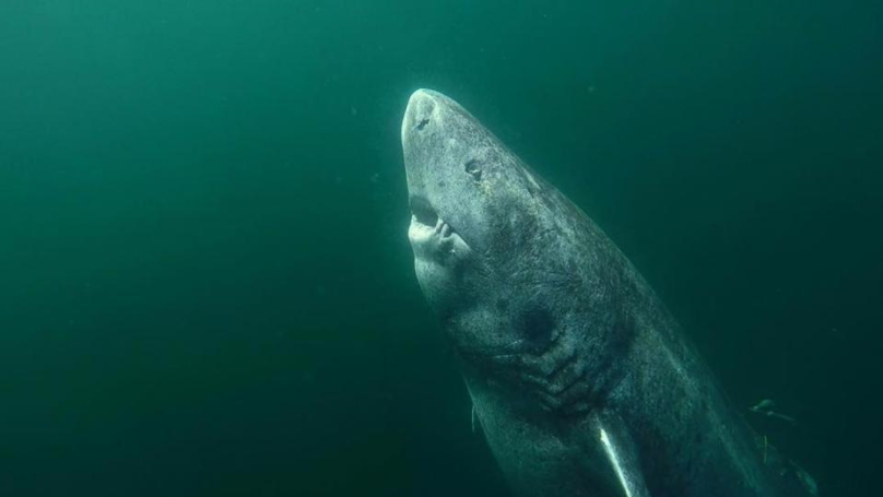 Scientists Catch A 500 Year Old Shark