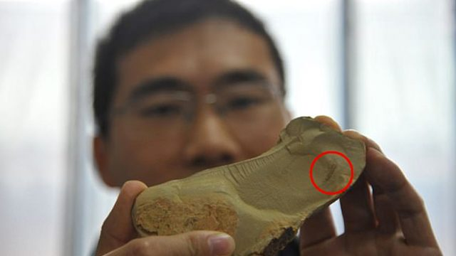 A 518 Million Year-Old Fossil Has Been Discovered, And It's Weird As F*$k