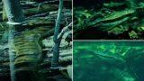 Giant Anaconda Ambushes Crocodile Underwater and Swallows It Whole