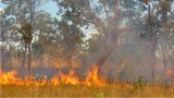 Scientists Have Proof Of These Aussie Birds Deliberately Starting Bush Fires
