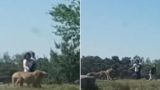Family tries to outrun cheetahs after getting out of car in Safari park