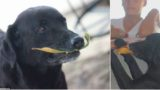 Genius dog invents his own currency