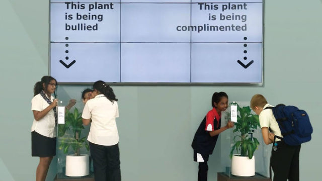 IKEA asked students to bully a plant for 30 days to see whether it would wither