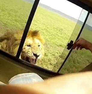 """Ah shit!"" Credit: YouTube/Wildlife Sightings"