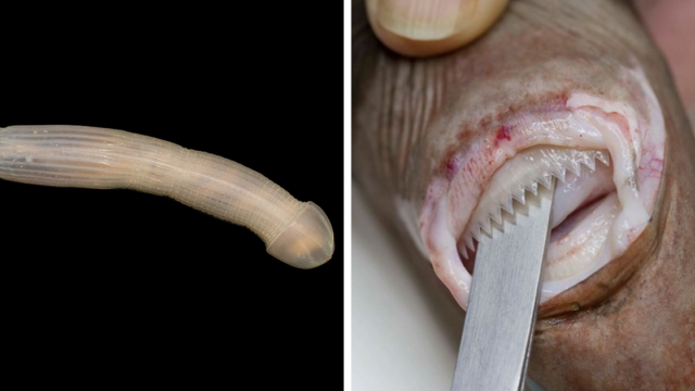 Scientists share the terrifying creatures they found in Australia's 5km deep ocean