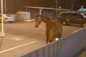 Still not the strangest thing you'll see in Logan at night. Credit: Queensland Police Service